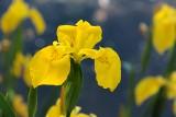 Kwiaty na podmokłą i wilgotną ziemię. Zobacz, co sadzić, gdy gleba w ogrodzie jest mokra