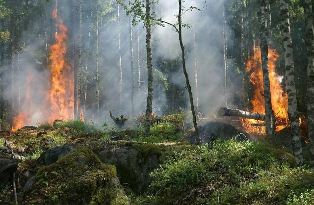 Pożar lasu - zdjęcie ilustracyjne