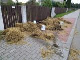 Mścichy. Protesty przeciwko nowelizacji ustawy o ochronie zwierząt. Rolnicy wysypali obornik przed domem posła PiS (ZDJĘCIA)