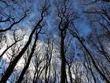Katowali ofiarę przywiązaną do drzewa. Grozili zakopaniem żywcem, oblewali moczem