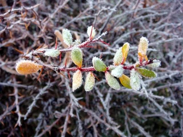 Ochłodzenie może spowodować szkody w sadach i ogrodach