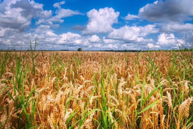 Na przełomie września i października rolnicy poznają stawki dopłat bezpośrednich za 2021 rok