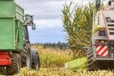 Praca na polach wre. Podglądamy początek jesieni u rolników - trwa uprawa pól, zasiewy, zbiory kukurydzy [zdjęcia]