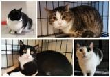 Koty do adopcji w Poznaniu. Zobacz piękne kociaki, które czekają na dom w schronisku przy Bukowskiej