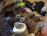 Marihuana w słoikach. 25-latek z Bałut miał jej całkiem sporo