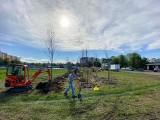 Sosnowiec: Nowy park w Zagórzu. Wsadzono już 250 pierwszych drzewek. Będzie jeszcze tysiąc