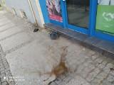 Interwencja. Brzydko pachnący skandal w centrum Szczecina. Mieszkaniec kamienicy wyrzuca nieczystości w workach... przez okno