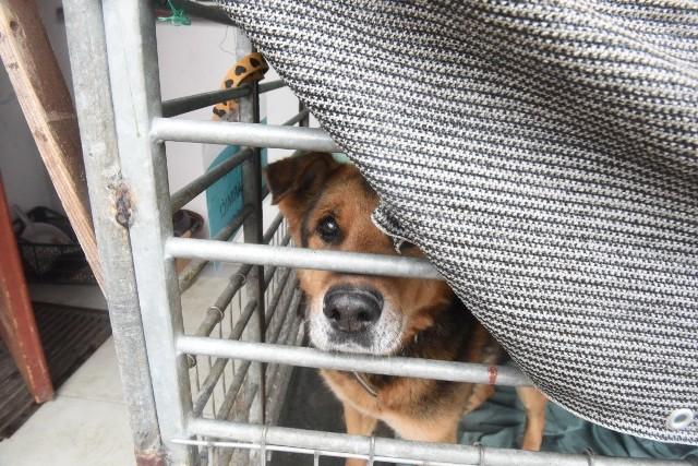 Pomóż przetrwać zimę psom z zielonogórskiego schroniska. Możesz dać im dom tymczasowy.