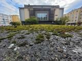 Zielona Piekiełko i asfalt na Grodzkiej. Zmiany na tyłach Starego Rynku w Słupsku