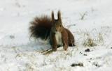 Jutro rano Wrocław będzie w śniegu. Przygotuj się na opady