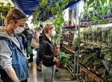 Roślinne targi na Zabłociu. Krakowianie kupują egzotyczne kwiaty w Hali Lipowa