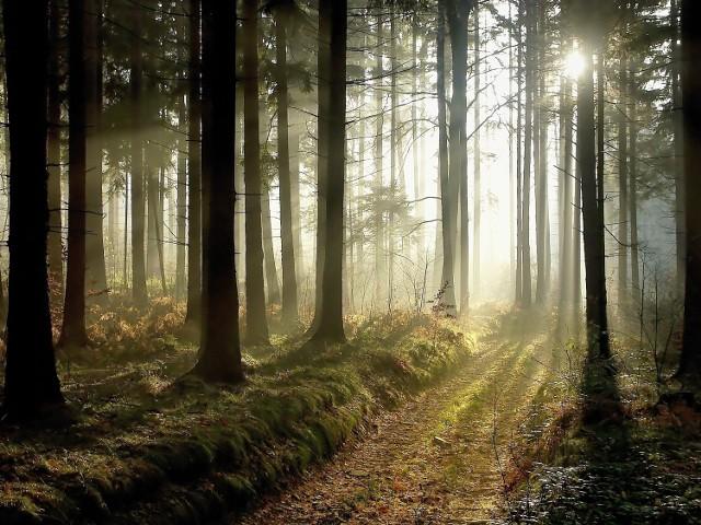 Była wiosna 1998 roku. W dąbrowskim lesie leśnicy dokonali wstrząsającego odkrycia