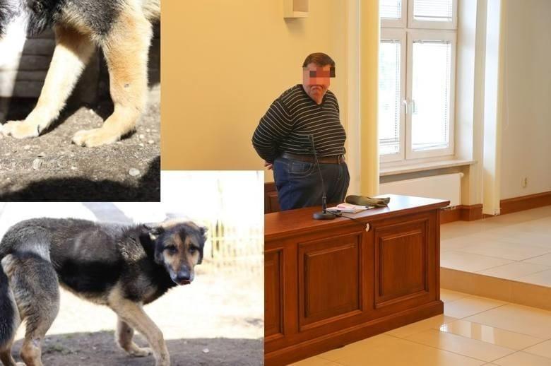 Białystok. Były kandydat na prezydenta Białegostoku usłyszał prokuratorskie zarzuty znęcania się nad psem [ZDJĘCIA]