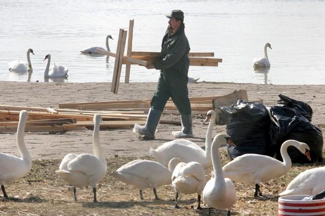 Zdjęcie z 2006 roku, gdy w Toruniu wykryto pierwszy w Polsce przypadek groźnej dla człowieka ptasiej grypy H5N1