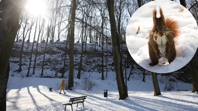 Miasto przygotowuje się do rewitalizacji parku Bednarskiego. Plan jest taki, by inwestycja została zrealizowana do końca 2022 roku.