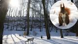 Kraków. Dziewięć firm zainteresowanych przebudową parku Bednarskiego [ZDJĘCIA]
