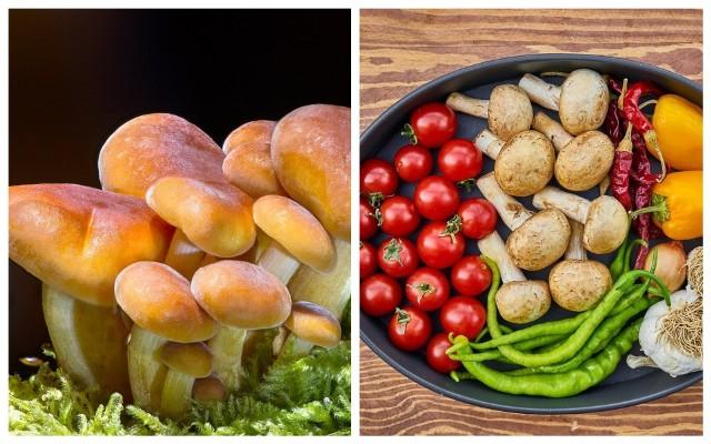 Najlepszy okres na grzybobranie przypada od połowy lata i trwa do późnej jesieni. Przy ich zbieraniu trzeba pamiętać, że nie każdy grzyb jest jadalny. Ponadto nie wszystkie osoby mogą je jeść. GIS wydał w tej sprawie ostrzeżenie. Zobacz, komu nie zaleca się jedzenia grzybów.