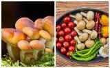 Te osoby nie powinny jeść grzybów. Oto najnowsze ostrzeżenie GIS dla grzybiarzy [lista]