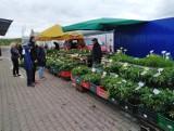 Białystok. Zobacz, ile kosztowały owoce, warzywa, kwiaty i zioła, które można było kupić 23 maja na giełdzie przy ul. Andersa (zdjęcia)