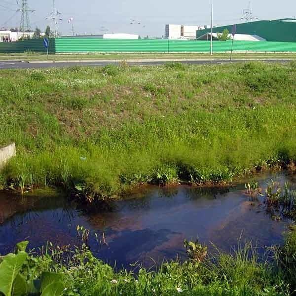 Przez Mielec i Specjalną Strefę Ekonomiczną przepływa potok Rów. Wielu mieszkańców twierdzi, że widoczna na potoku maź to efekt działalności SSE. Fachowcy temu zaprzeczają.