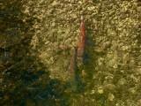 Muszyna. Głowacice pływają w Muszynce. Przyciągnęła je czysta woda [ZDJĘCIA]