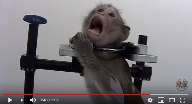 W niemieckim laboratorium zwierzęta poddawane były torturom.