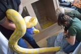 Węże w mieszkaniu na osiedlu w Poznaniu - interweniowała policja i pracownicy zoo