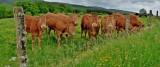 Co opłaca się hodować w Polsce? Rolnik radzi rolnikowi: owady białkowe, indyki, a dla wytrwałych krowy mleczne