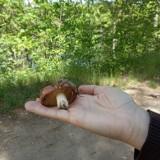 To nie żart! Trochę popadało i w okolicy Zielonej Góry pojawiły się ostatnio pierwsze grzyby? Nasz Czytelnik pochwalił się swym znaleziskiem