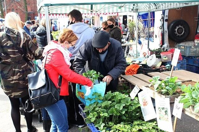Rodzina Rosińskich (na zdjęciu pan Zbigniew, senior rodu) produkuje i sprzedaje na inowrocławskim targowisku bogaty asortyment jednorocznych rozsad warzyw