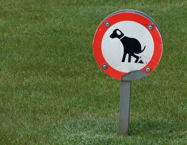 Sposobów na walkę z psimi kupami jest wiele. Skwierzyna zachęca do obywatelskiej postawy.