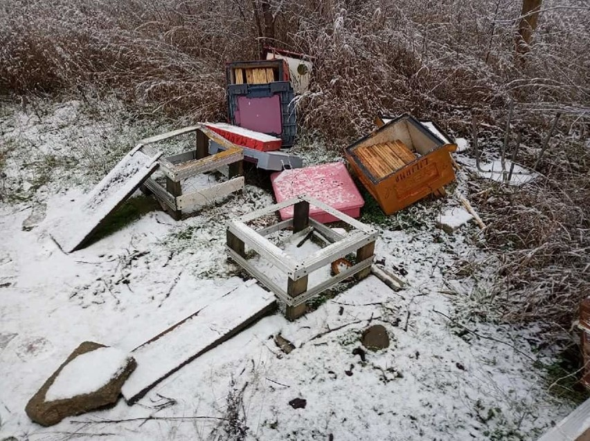 Kilkanaście uli zostało kompletnie zdewastowanych, a tysiące...