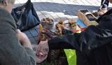 Sezon na grzyby w Świętokrzyskiem. Borowiki, kurki, kozaki, podgrzybki, maślaki i kanie na bazarach w Kielcach. Zobaczcie ceny [ZDJĘCIA]