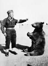Wielka Brytania: Powstanie film o słynnym niedźwiedziu Wojtku. Reżyserem animacji będzie Iain Harvey