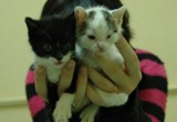 Kociaki z biblioteki w Kluczborku znalazły już nowych właścicieli