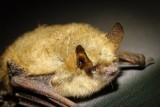 Supraśl. Oko w oko z wampirem, czyli VII Noc Nietoperzy w Parku Krajobrazowym Puszczy Knyszyńskiej