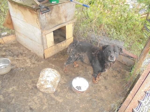 Zwierzę było zamknięte bez wody i pokarmu w metalowym kojcu