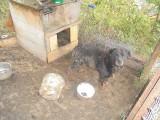 Wyjechała z Polski, a psa zostawiła zamkniętego w kojcu. Zwierzak ledwo przeżył