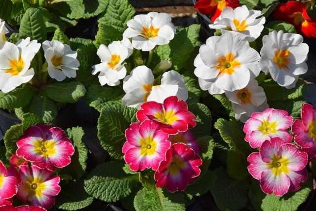 W sobotę Agrohurt w Rzeszowie tonął w kwiatach i sadzonkach.