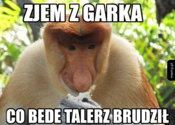 Janusz Nosacz - memy z nosaczem sundajskim są niezwykle popularne w polskim internecie