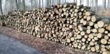 Przygnębiający obraz Puszczy Bukowej. Setki powycinanych drzew. ZDJĘCIA