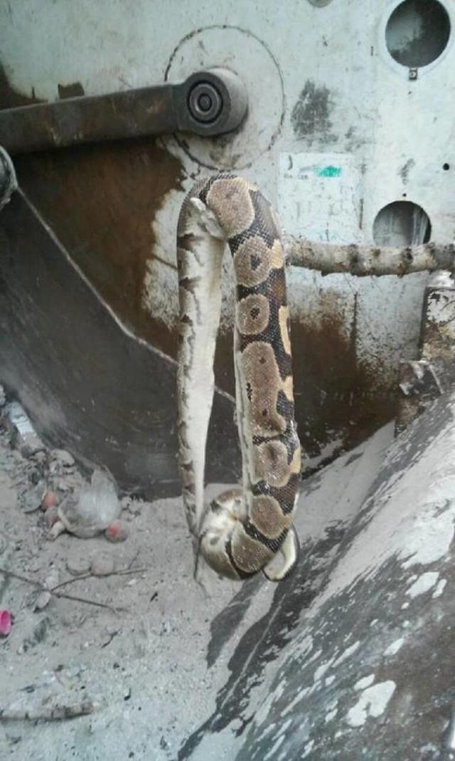 Do przypadków porzucania padłych zwierząt w śmietnikach doszło w ostatnim czasie na terenie gminy Pruszcz Gdański