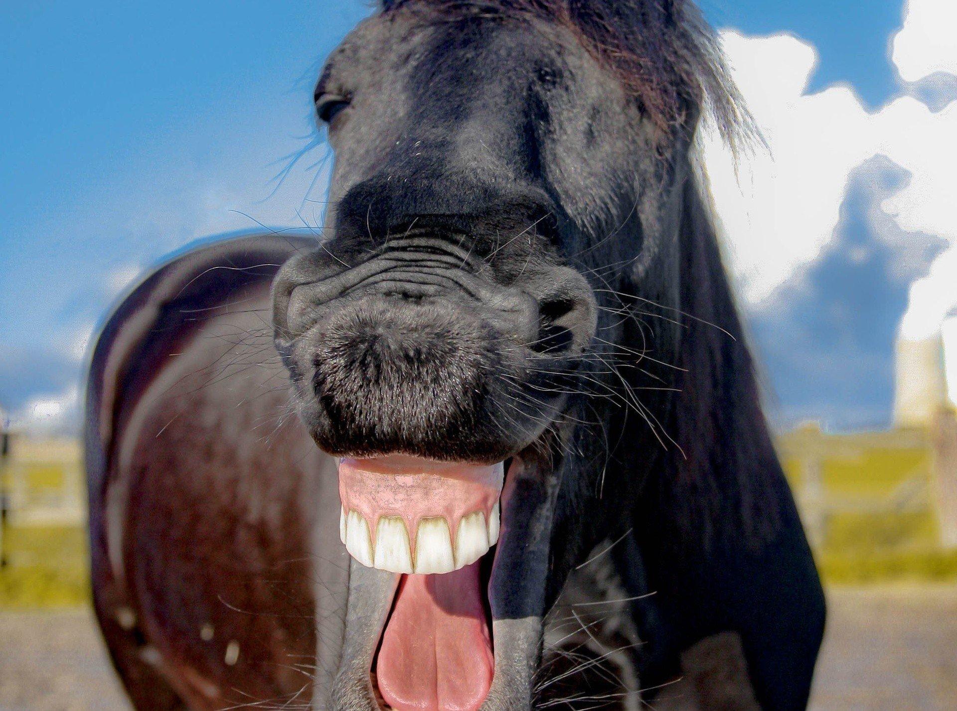 Prima Aprilis 2020. Szukasz pomysłu na dobry żart? Żarty, kawały, dowcipy, pranki na 1 kwietnia [1.04.2020] | Express Bydgoski
