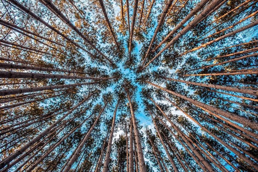 Drzewa mają swój internet...