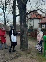 Poznań: Jednak uda się uratować drzewa z parku Wieniawskiego od wycięcia - radni osiedlowi dadzą pieniądze na ich ratowanie
