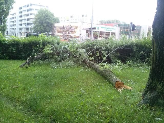 W piątek, 17 czerwca, powalona przez wiatr odnoga drzewa spadła na chodnik przy ul. Wyspiańskiego w Zielonej Górze. Całe szczęście, że akurat nikt tędy nie przechodził. Zdjęcia otrzymaliśmy od Czytelniczki.