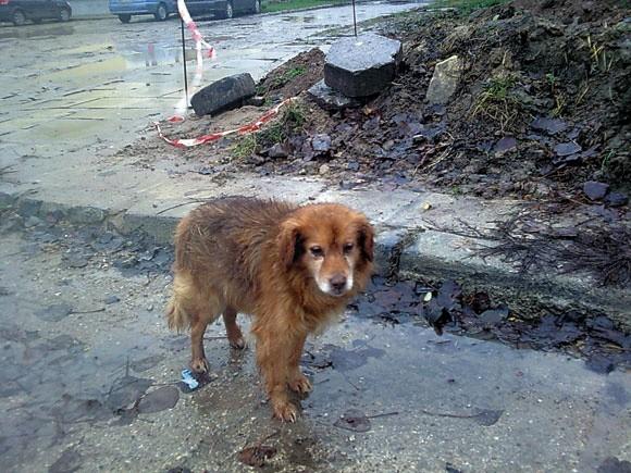 Czipowanie sprawi, że właściciel psa dziesięć razy pomyśli, zanim wyrzuci zwierzę na ulicę i skaże je na bezdomność