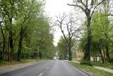 Drzewa w Szczecinie. Ile ich jest i czy są zdrowe? Powstanie szczecińska mapa drzew. Inwentaryzacja zajmie kilka lat