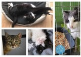 Koty z poznańskiej fundacji szukają domu. Znajdź swojego przyjaciela wśród podopiecznych Animal Security