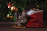 Kot, pies i dziecko to główne zagrożenia dla choinki. Sprawdź co zrobić, aby choinka była bezpieczna [GALERIA]